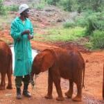 Baby elephant at David Sheldrick's Elephant Orphanage
