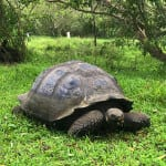 Galapagos Tortoise Reserve
