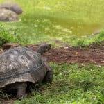Santa Cruz tortoise reserve
