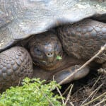 Galapagos Tortoise Reserve